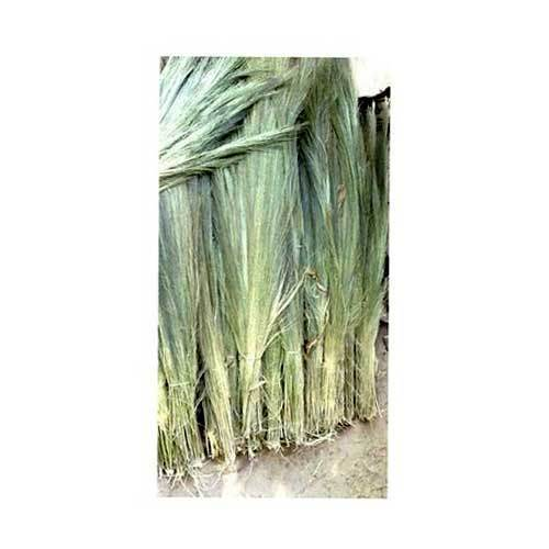 Silchar Broom Grass
